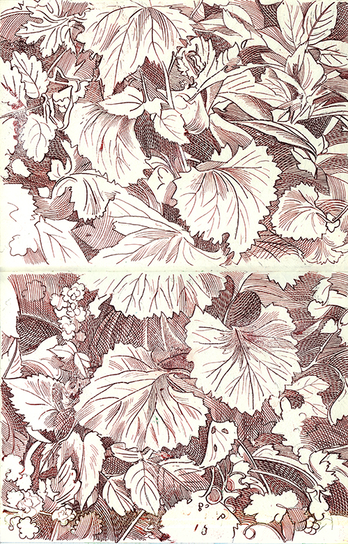 Disegni Botanici 10